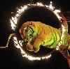 Цирки в Барыбино